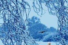 Nevermore 8